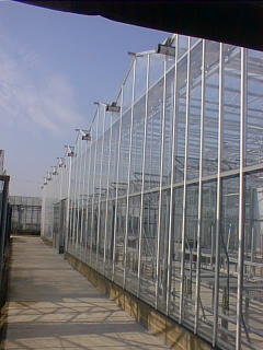 glasshouses at Wye